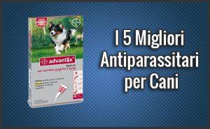 Qual è il Miglior Antiparassitario per Cani? – Opinioni, Recensioni, Prezzi (Dicembre 2018)