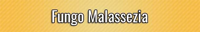 Fungo Malassezia