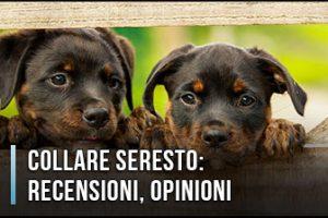 Collare Seresto - Opinioni, Recensioni, Prezzo (Gennaio 2020)