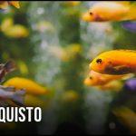 guida-all-acquisto-filtri-interni-per-acquari