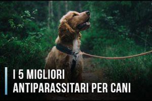 Qual è il Miglior Antiparassitario per Cani? – Opinioni, Recensioni, Prezzi (Gennaio 2020)