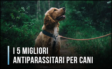 migliori-antiparassitari-per-cani