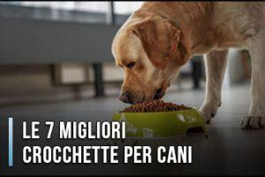 Quali sono le Migliori Crocchette e Cibi per Cani? - Opinioni, Recensioni, Prezzi (Gennaio 2020)