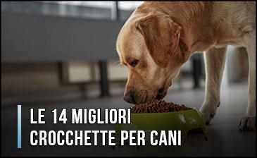 migliori-crocchette-per-cani
